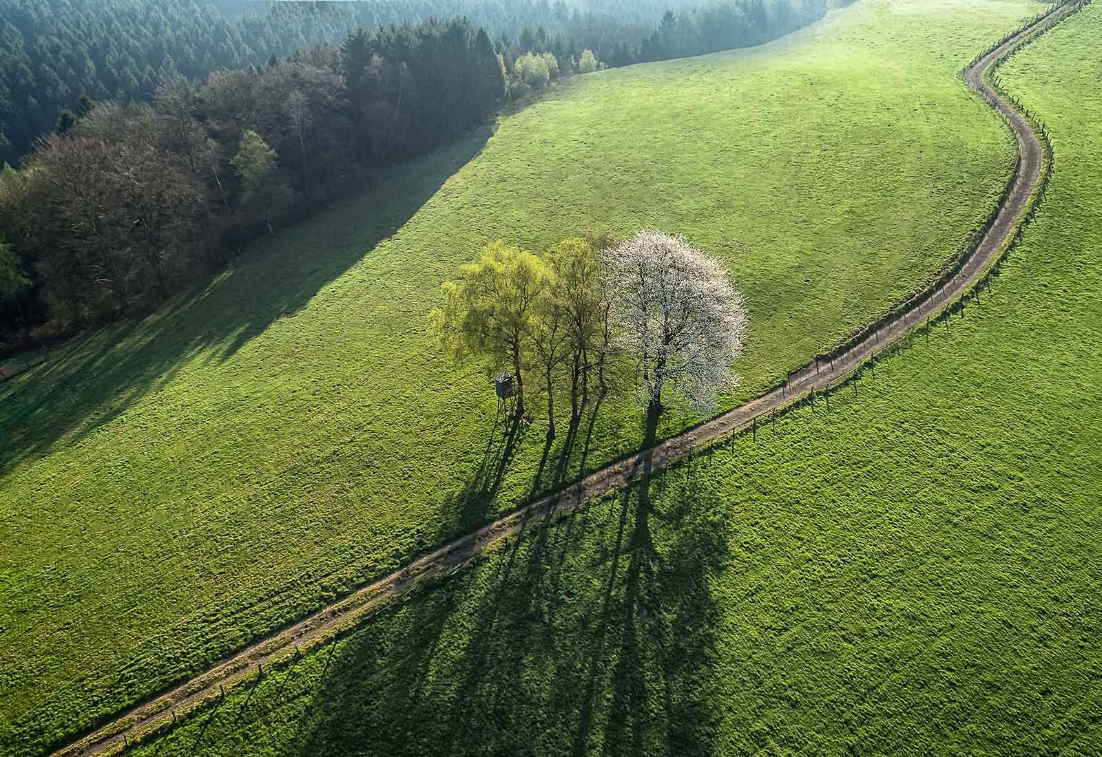 heysky Drohnenfotos Wald und Wiese bei Much